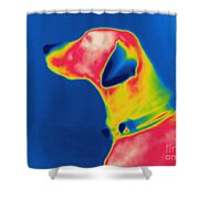 Thermogram Of A Dog Shower Curtain