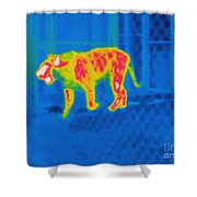 Thermogram Of A Tiger Shower Curtain