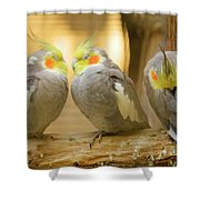 They Love Each Other But Nobody Loves Me Shower Curtain