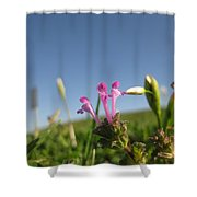They Might Be Flowers Shower Curtain