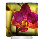 Think Of Spring Time Shower Curtain