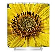 Thinleaf Sunflower Shower Curtain