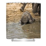 Thirsty Young Elephant Shower Curtain
