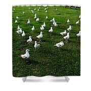 This Meeting Is Now Called To Order Shower Curtain