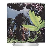 This Shot Is An Enlargement Of 55f13 Shower Curtain