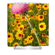 Thistle And Coreopsis 2am-110455 Shower Curtain