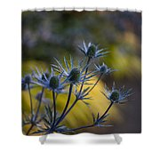 Thistles Abstract Shower Curtain