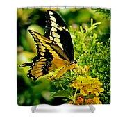 Thoas Swallowtail #1 Shower Curtain