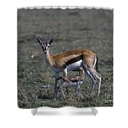 Thomson Gazelle And Newborn Calf Shower Curtain