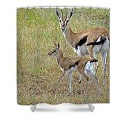 Thomsons Gazelle Shower Curtain