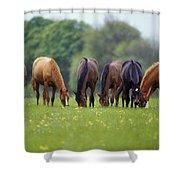Thoroughbred Horse, Ireland Shower Curtain