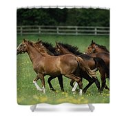 Thoroughbred Horses, Ireland Shower Curtain
