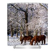 Thoroughbred Horses, Mares In Snow Shower Curtain