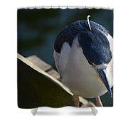 Thoughtful Bird Shower Curtain