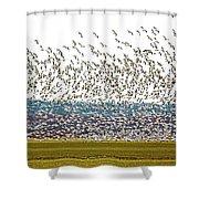 Thousands Shower Curtain