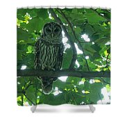 Three Barred Owls Shower Curtain