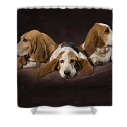 Three Basset Hound On Brown Muslin Shower Curtain