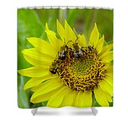 Three Bees Hunkering Down Shower Curtain