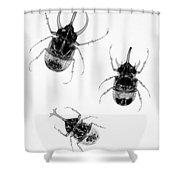 Three Beetles X-ray Shower Curtain