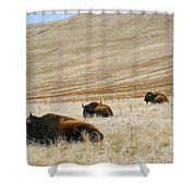 Three Bison Shower Curtain