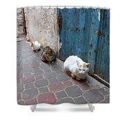 Three Cats In Essaouira Shower Curtain