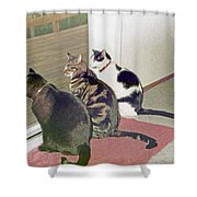 Three Cats Looking Out Into The Forest Shower Curtain
