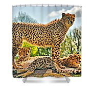 Three Cheetahs Shower Curtain
