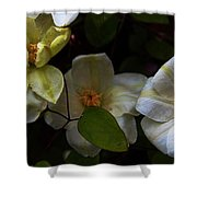 Three Clematis More Shower Curtain