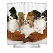 Three Dogs Shower Curtain