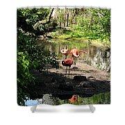 Three Flamingos Shower Curtain