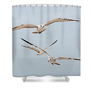 Three Gulls Shower Curtain