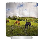 Three Horses Grazing In Field Shower Curtain