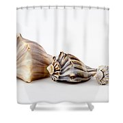 Three Knobbed Whelks. Shower Curtain