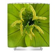 Three Lobed Evening Primrose Shower Curtain