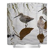 Three Long Billed Dowitchers Shower Curtain