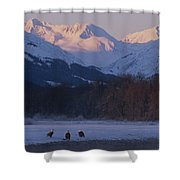 Three Northern American Bald Eagles Shower Curtain