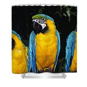Three Parrots Shower Curtain