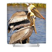 Three Pelicans On A Stump Shower Curtain