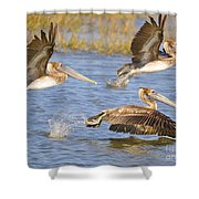 Three Pelicans Taking Off Shower Curtain