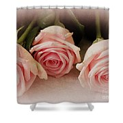 Three Pink Roses Shower Curtain