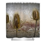 Three Prickly Teasels Shower Curtain