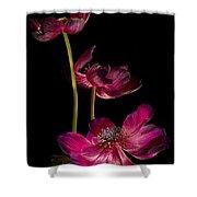 Three Purple Anemones Shower Curtain