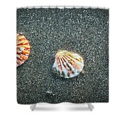 Three Sea Shells Shower Curtain