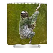Three-toed Sloth Climbing Shower Curtain by Heiko Koehrer-Wagner