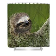 Three-toed Sloth Shower Curtain by Heiko Koehrer-Wagner