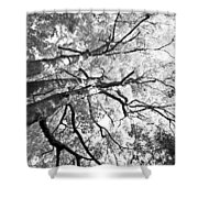 Three Trees Reach For The Sky Black And White Shower Curtain