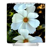 Three White Flowers Shower Curtain