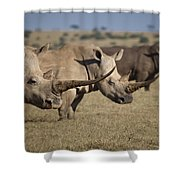 Three White Rhinos Line Up In Solio Shower Curtain