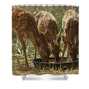Three White-tailed Deer Fawns Shower Curtain