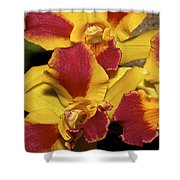 Three Yellow And Red Orchids Shower Curtain